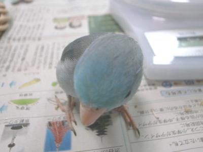 20090804_paku_atama2